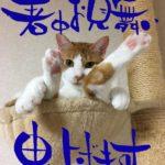 桜月の筆文字ハガキ取扱説明書
